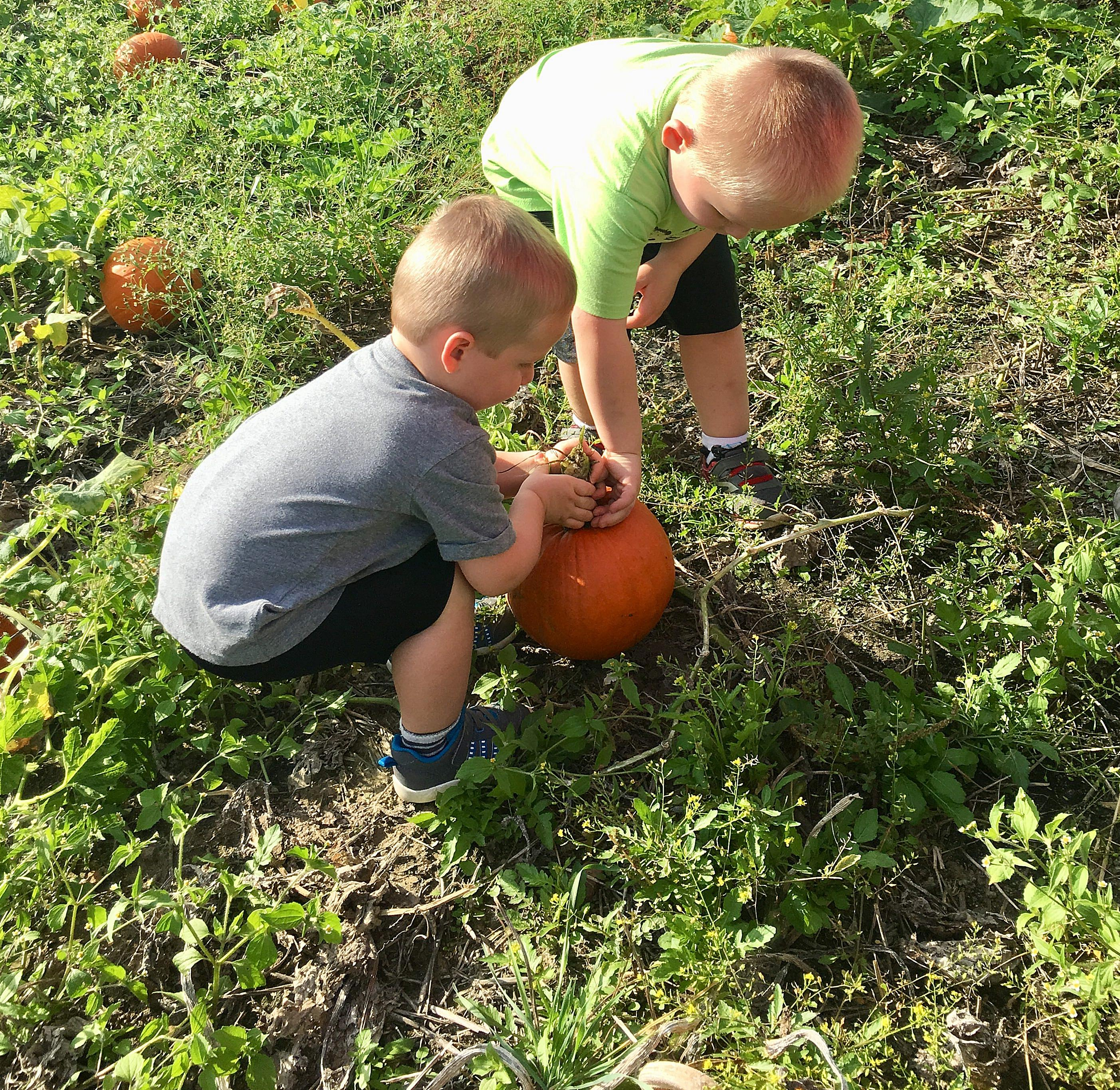 4 Perfect Pumpkin Patches for Kids around Circle City