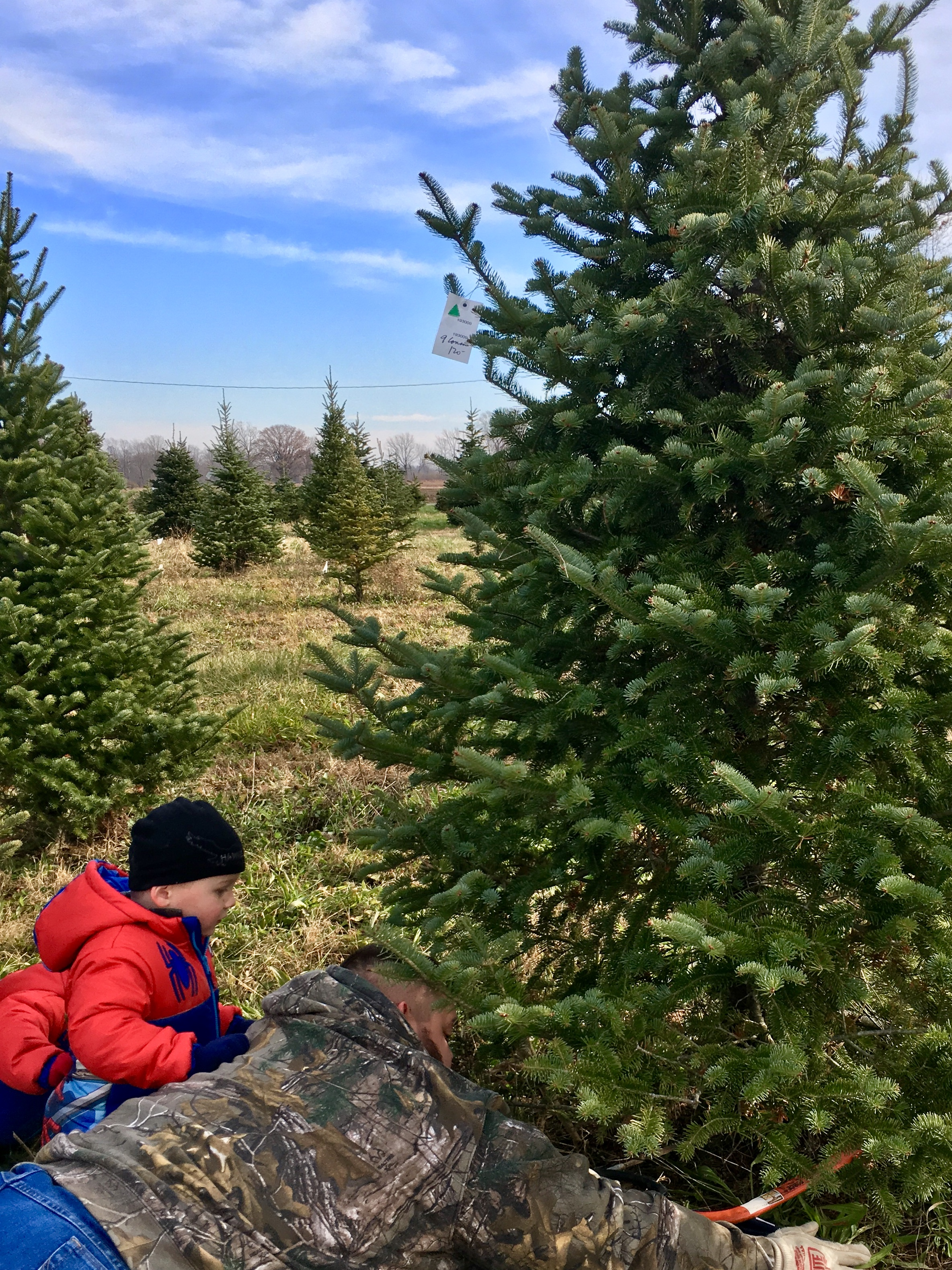 Cutting Your Own Christmas Tree - Circle City Adventure Kids