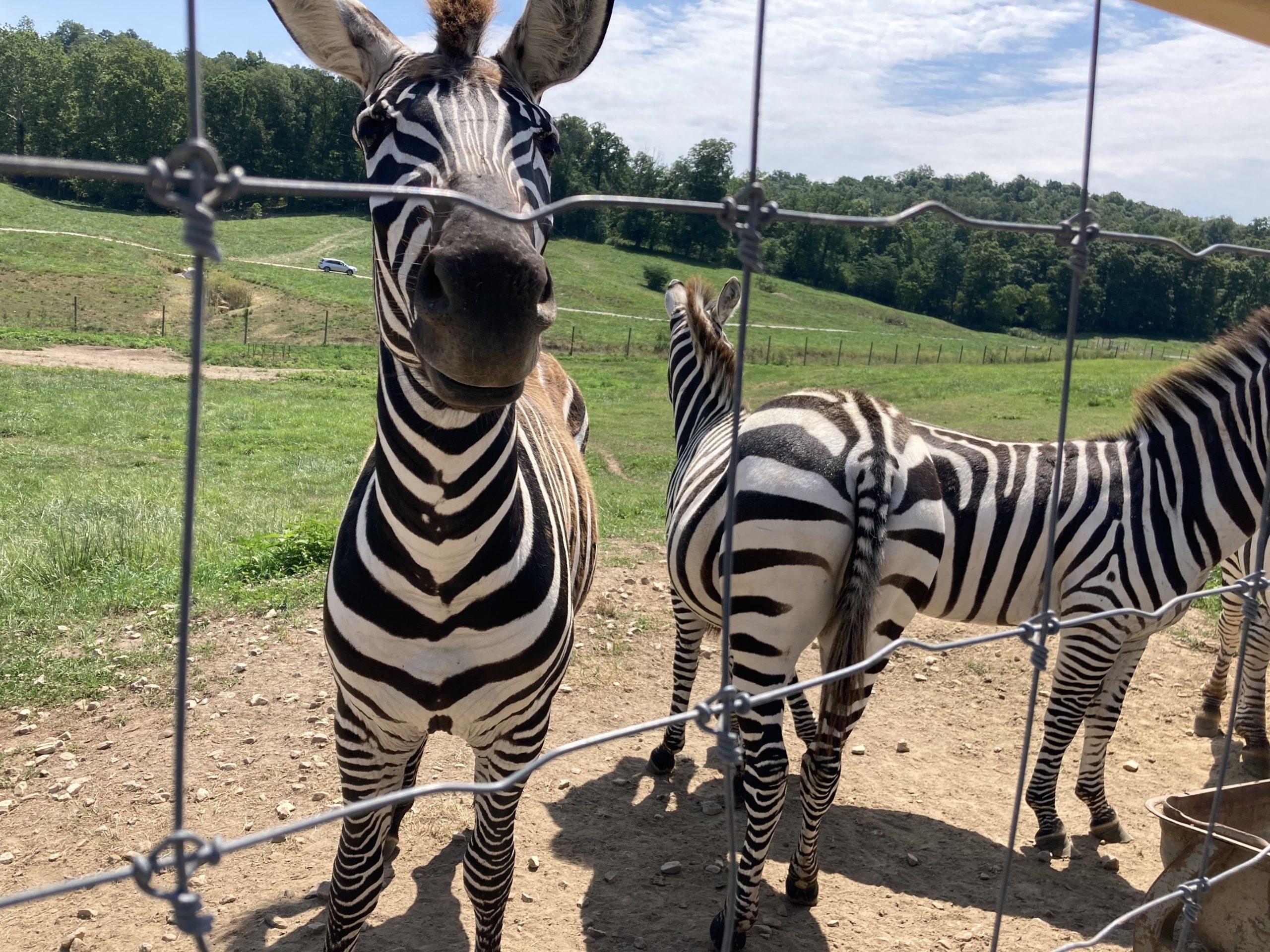 Circle City Adventure Kids - Wilstem Wildlife Drive Thru Park