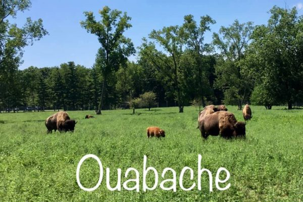 Ouabache - Circle City Adventure Kids